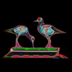 X-ray-birds-couple2
